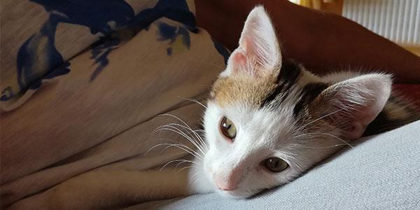 centchatsgrain - visite à domicile de vos animaux de compagnie